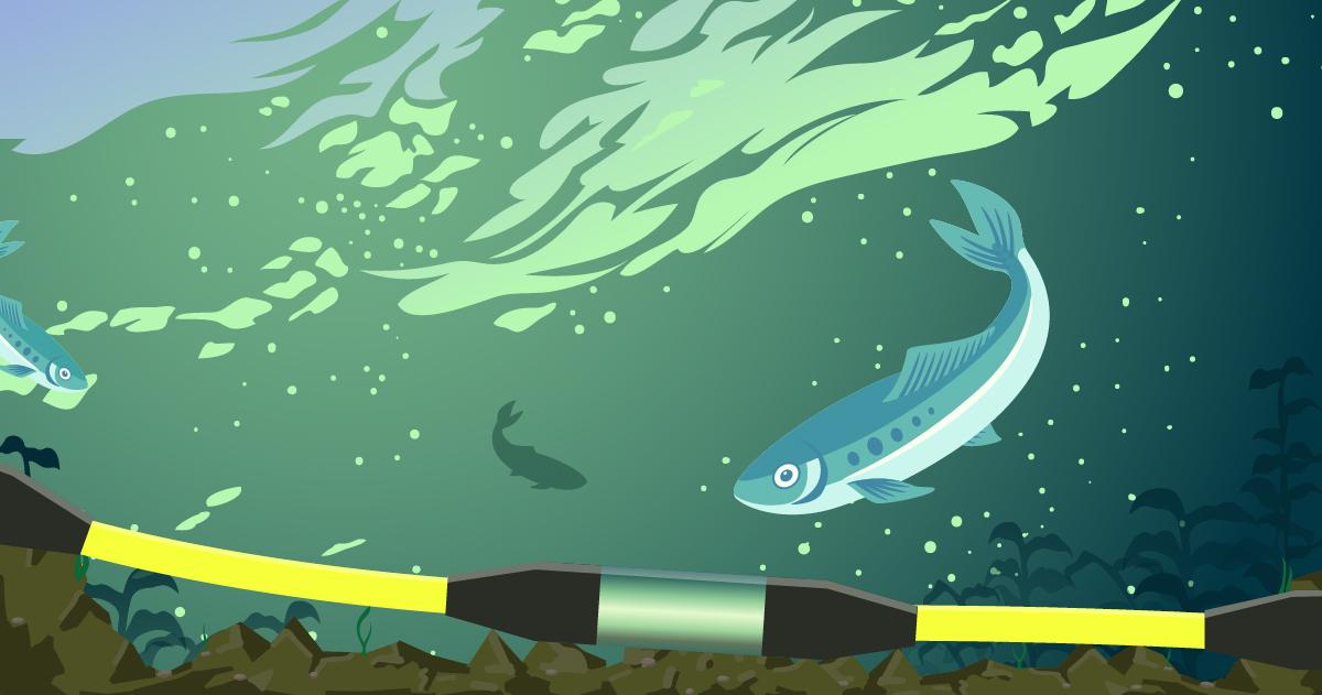 AGI Blog_How Does Marine Electrical Resistivity Impact Fish