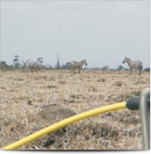 Kenya Survey Line
